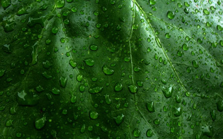 Earth Leaf 50 cool free desktop wallpapers