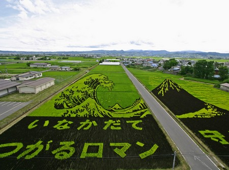field ukiyo-e