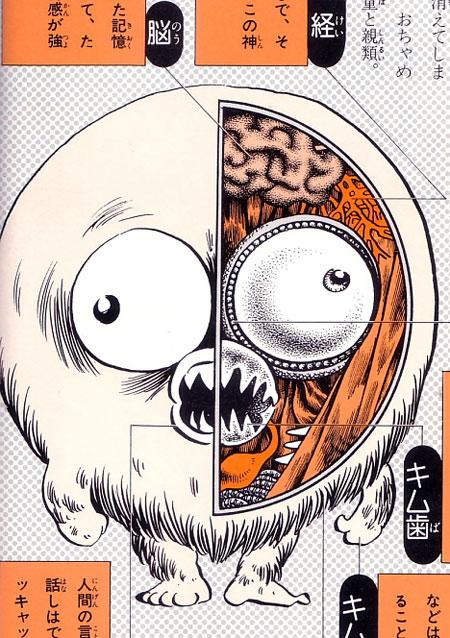 Yokai anatomy
