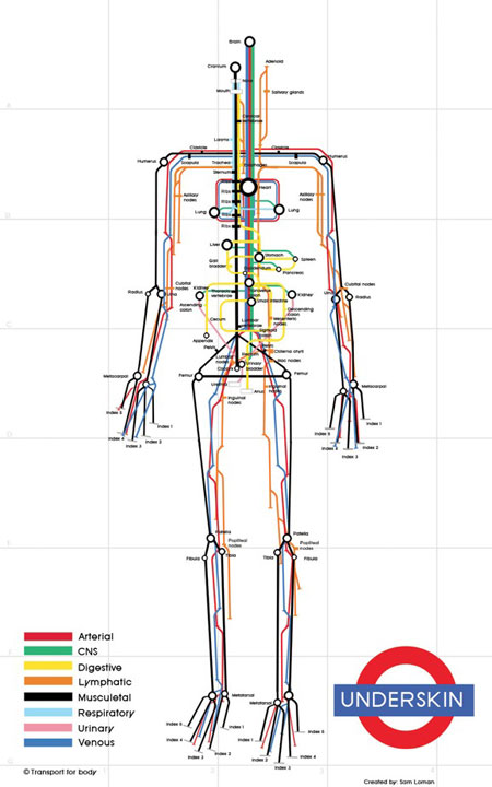The human body as a subway map