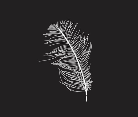 Free feather vector