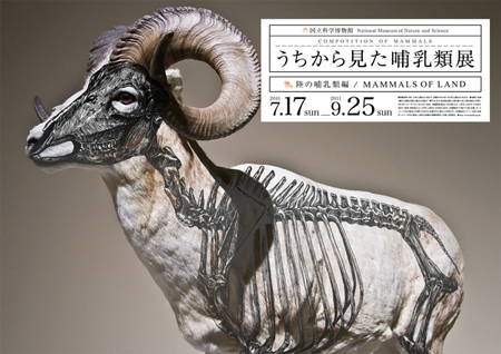 Composition of Mammals by Wataru Yoshida