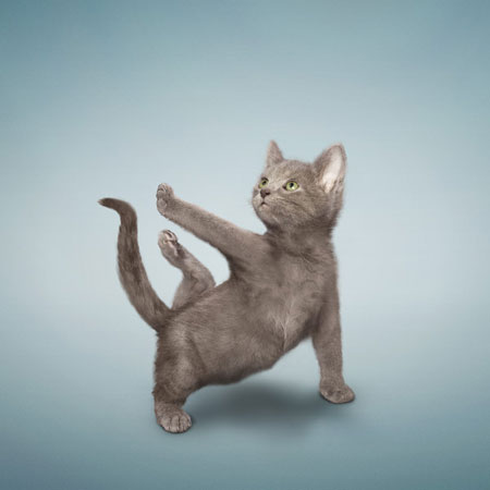 Yoga Kittens by Daniel Borris