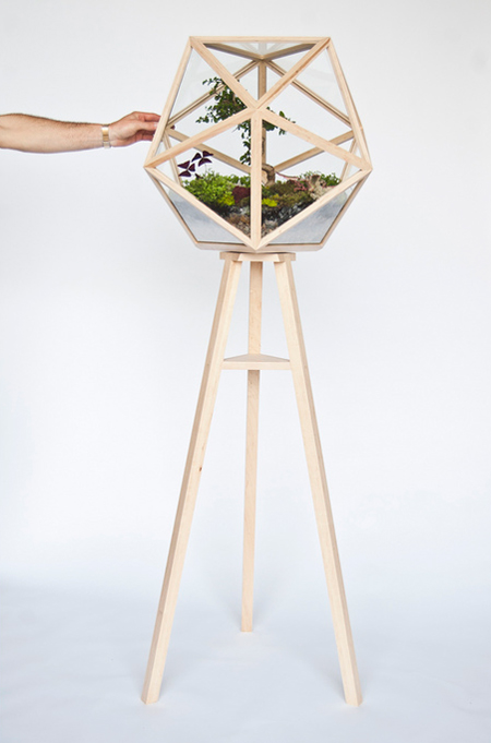 Terra Firma terrarium