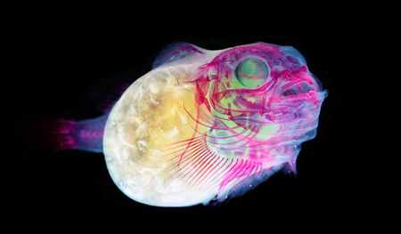 New world transparent specimens by Iori Tomita