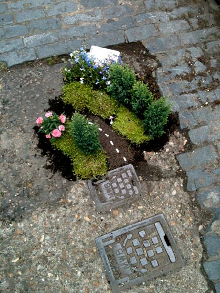 The pothole gardener