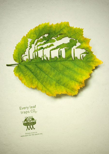 Cut Leaf Illustrations
