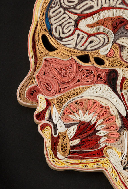 Anatomical cross-sections made with quilled paper