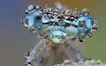 Dew-Soaked Insects Photographed by Ondrej Pakan