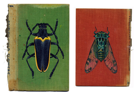 Bugs on book covers