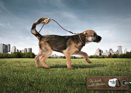 The Best Dog Walking Award