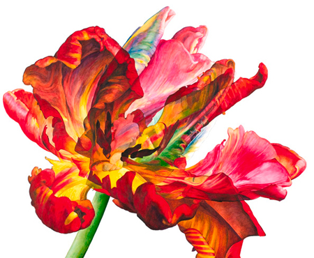Contemporary botanical painting in Rosie Sanders