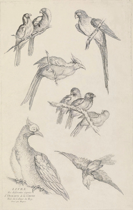China birds engravings