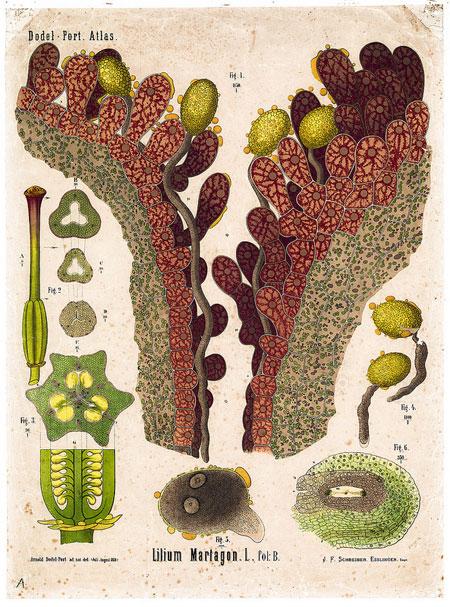 Plant anatomy charts