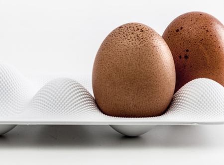 eggwave-2