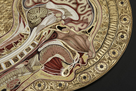 anatomy-5