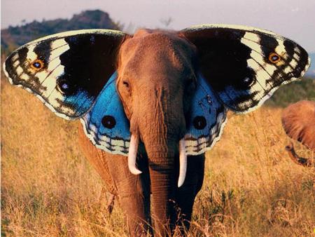 elephant-butterfly-2