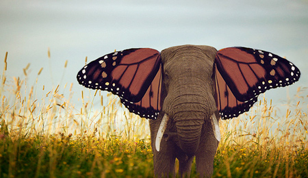 Elephants Make Pretty Butterflies