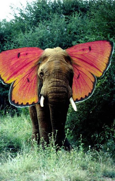 elephant-butterfly-6