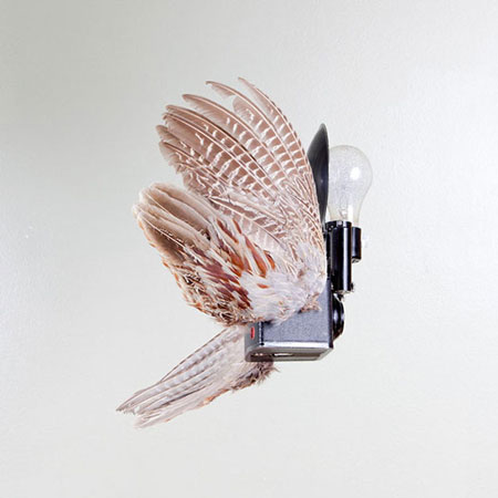 Birds of aperture