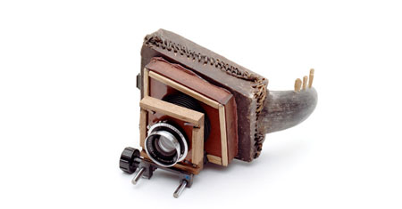Cameras made from turtles and armadillos by Taiyo Onorato