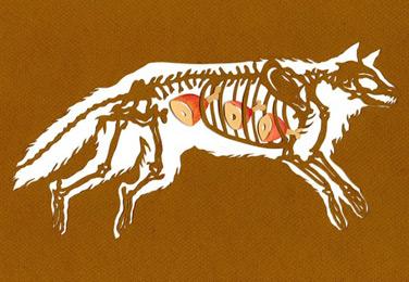 Bone-A-Day