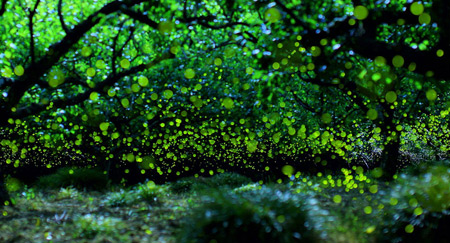 Long Exposure Photos of Fireflies