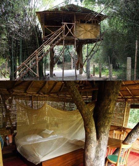treehouse-hotel