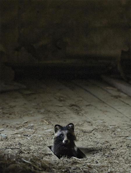 abandoned-house-2