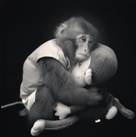Monkey-Series-12-640x647