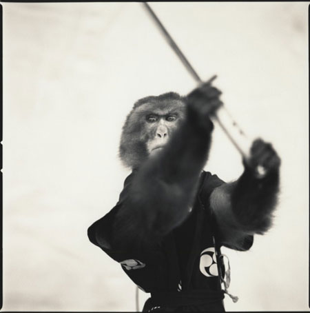 Black & white photo: Monkey series