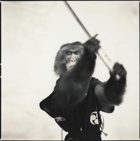 Monkey-Series-15-640x645
