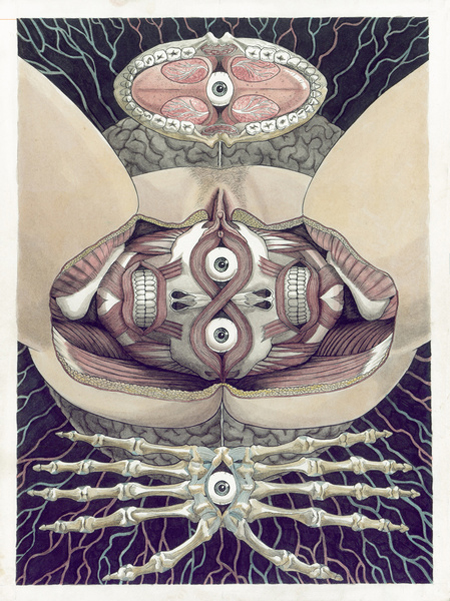 Reflected anatomical illustrations