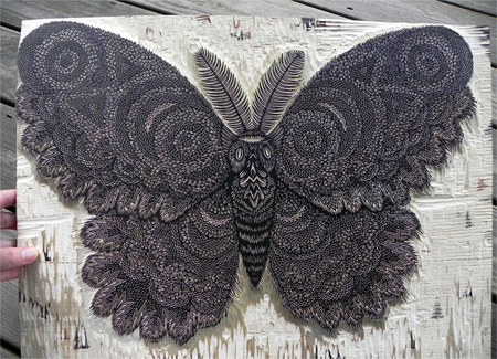 Moth: new woodcut print from Tugboat Printshop