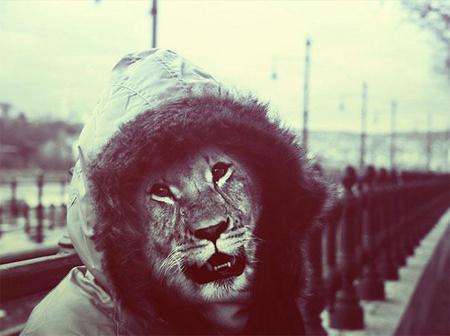 animal-dressed-3