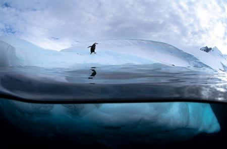 Stunning antarctic wildlife photography