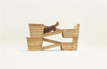 architecture-for-dogs