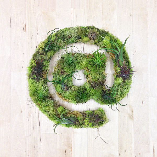 Wall art using plants and moss