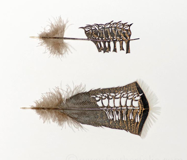 feathers-3