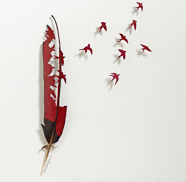 feathers-8