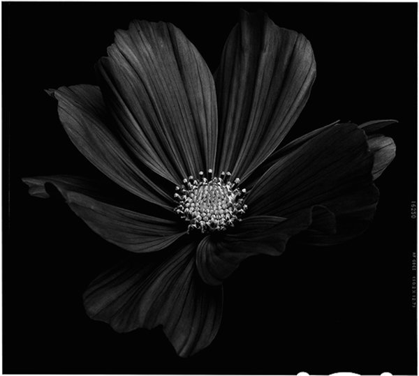 Black-to-Black-Flowers-4