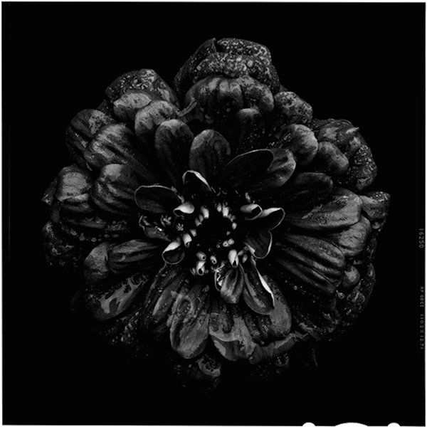 Black-to-Black-Flowers-6