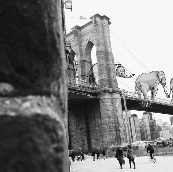 elephants__880