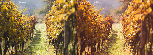 Fall Color Boost Photoshop Action