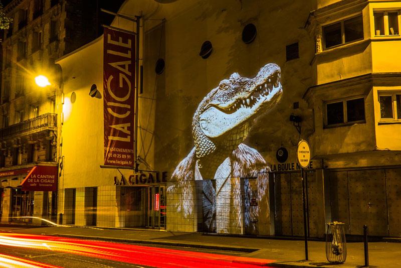 safari-urbain-une-expdsfsdf$dans-les-rues-de-paris