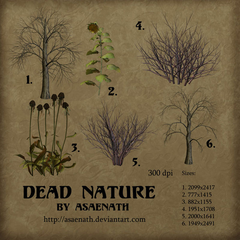 dead_nature_by_asaenath_by_tube_traders