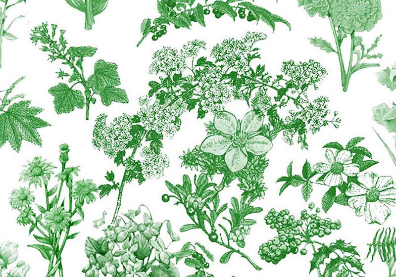flora-brushes-1