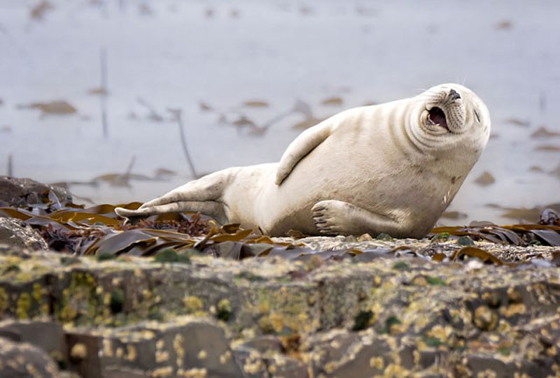 The best of the Comedy Wildlife Photography Awards