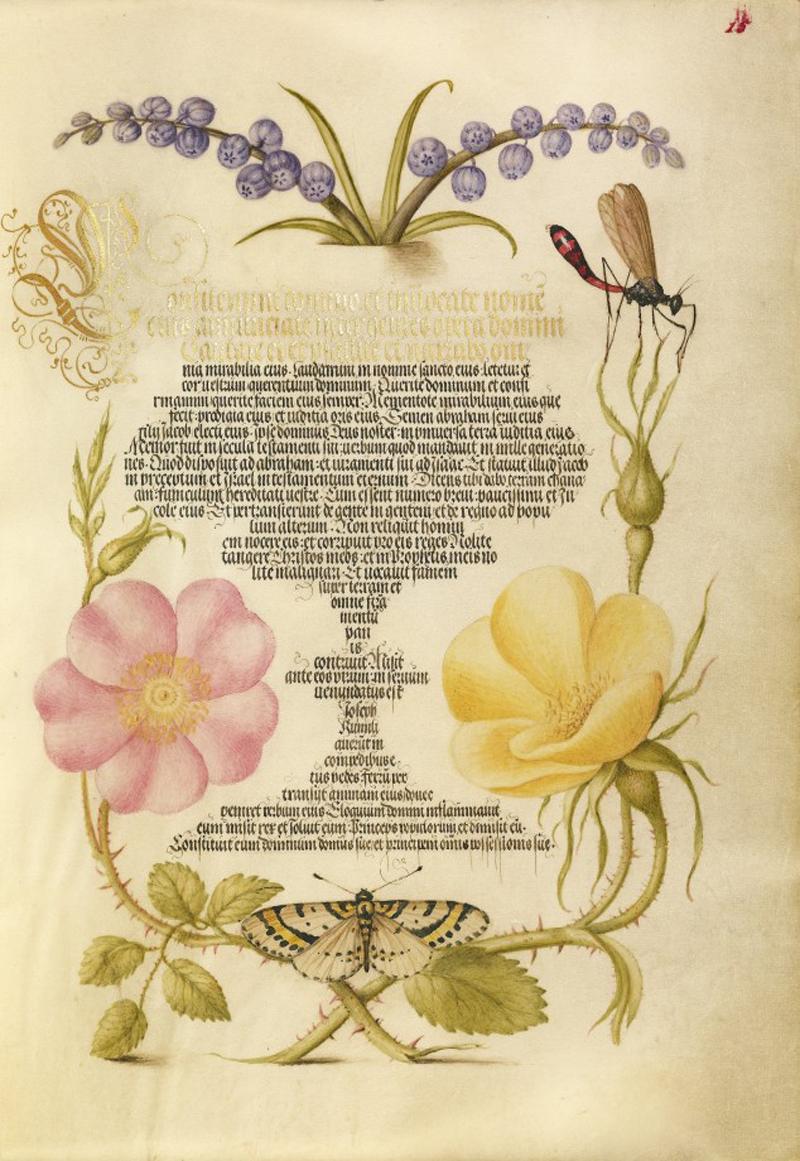 Mira-calligraphiae-monumenta-01-634x920