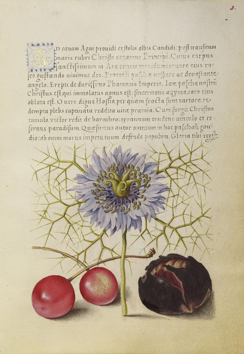 Mira-calligraphiae-monumenta-09-634x920